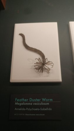 There were a number of marine invertebrates on display. I thought this one looked like a facehugger from Alien.
